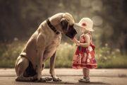 """""""Любимые четвероногие народов мира: собаки"""", онлайн-викторина."""